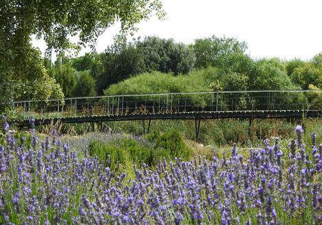 El Jardín Botánico de Castilla-La Mancha acogerá este domingo la firma de la adhesión al Pacto Verde Europeo