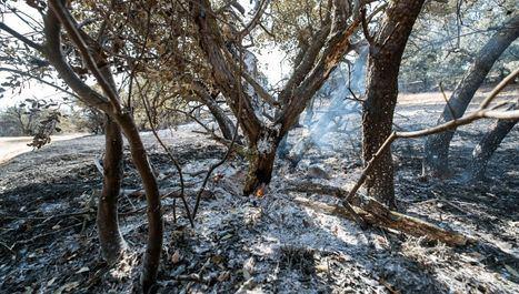 Dan por estabilizado el incendio forestal de Toledo capital