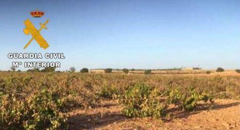 La Guardia Civil recupera 24.000 kilos de uva sustraída en una explotación vitivinícola de Mahora