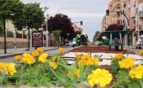 La Concejalía de Sostenibilidad del Ayuntamiento de Albacete realiza trabajos de ornamentación en la mediana de la Carretera de Jaén