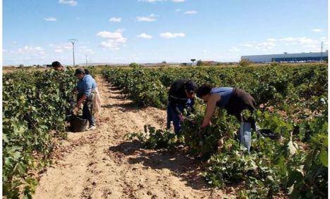 Alcaldes y portavoces del PP de Albacete muestran su preocupación por la llegada de temporeros y exigen a Subdelegación extremar las medidas de prevención