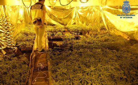 La Policía Nacional de Hellín detiene a los siete integrantes de una organización criminal internacional dedicada al tráfico de 'Cannabis'