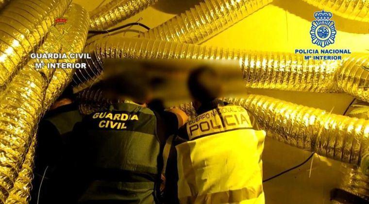 La Guardia Civil y la Policía Nacional desmantelan un centro intensivo de producción y germinación de Cannabis Sativa