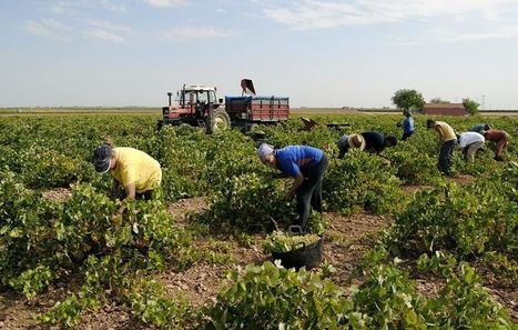Los empresarios del campo de Castilla-La Mancha deberán listar a los temporeros contratados y recabar datos de sus convivientes