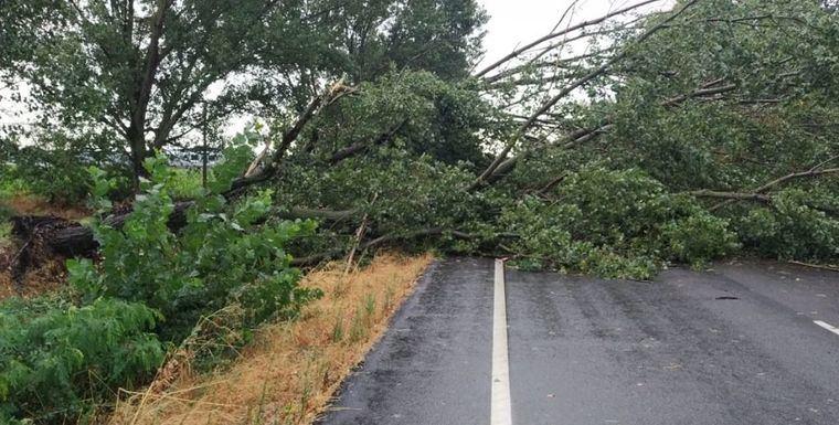 Casi 50 incidencias en Castilla-La Mancha por el temporal con desprendimiento de fachadas, caídas de árboles y achiques de agua