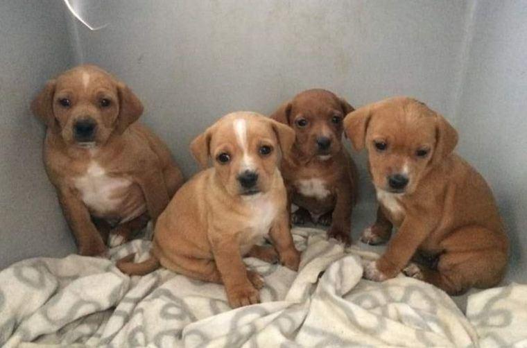 'Emperrados', el programa de protección animal de la Diputación de Albacete recogió durante 2020 más de 200 canes abandonados