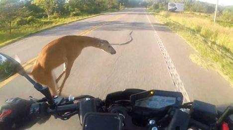 Sucesos.- Fallece un motorista en Azután (Toledo) tras chocar contra un ciervo